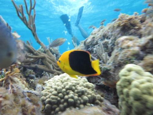 Stingray City Grand Cayman