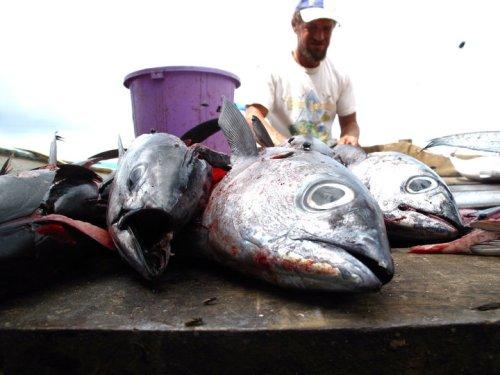 Fisherman, Utila, Honduras