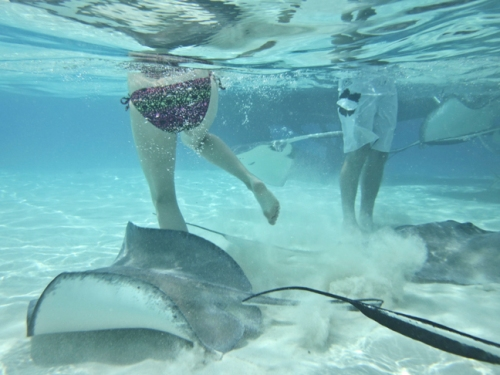 Stingray City Grand Cayman, Cayman Islands