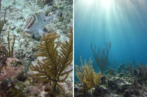 Diving Bahamas