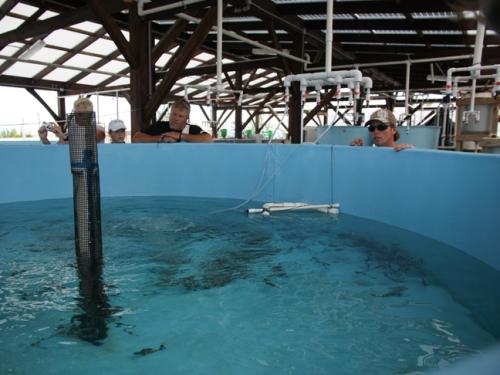 The Island School, Eleuthera, Bahamas