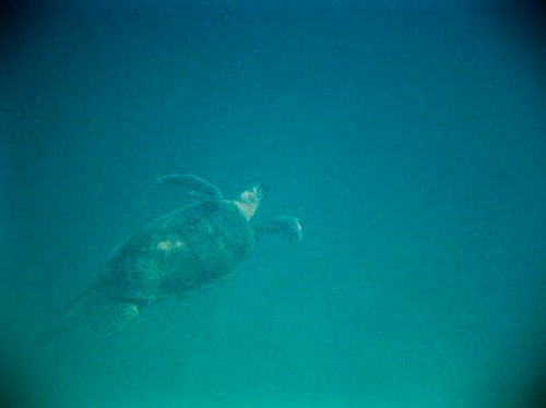 Perhentian Snorkel Tour