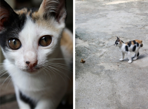 perhentian cats